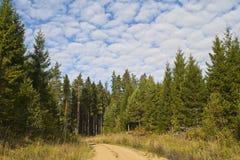 Chemin forestier en été Image stock