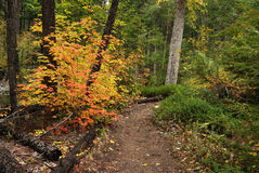 Chemin forestier en automne Photo stock
