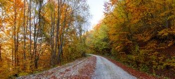 Chemin forestier en automne Photos stock