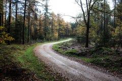 Chemin forestier en automne, parc national le veluwe aux Pays-Bas Photographie stock libre de droits