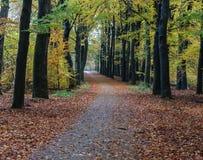 Chemin forestier en automne, parc national le veluwe aux Pays-Bas Photographie stock