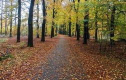 Chemin forestier en automne, parc national le veluwe aux Pays-Bas Photos stock