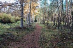 Chemin forestier en automne, parc national le veluwe aux Pays-Bas Images libres de droits