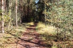 Chemin forestier en automne, parc national le veluwe aux Pays-Bas Photo stock