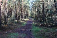 Chemin forestier en automne, parc national le veluwe aux Pays-Bas Image stock