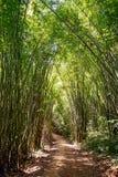 Chemin forestier en bambou Photo stock