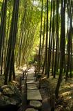 Chemin forestier en bambou Image libre de droits