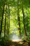 Chemin forestier en brouillard photos stock