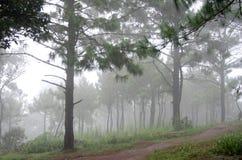 Chemin forestier en brouillard Image stock