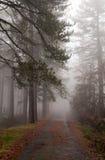 Chemin forestier en brouillard Photos libres de droits