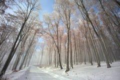 Chemin forestier en hiver Photo stock