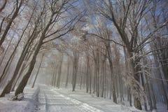 Chemin forestier en hiver Photographie stock libre de droits