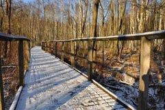 Chemin forestier en hiver photo libre de droits