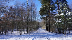 Chemin forestier en hiver Image stock