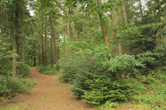 Chemin forestier en nature Image stock