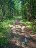 Chemin forestier ensoleillé Photos libres de droits