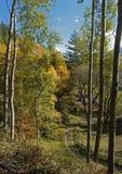 Chemin forestier entre de hauts arbres Photographie stock libre de droits
