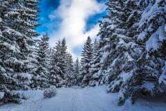 Chemin forestier entre les arbres en hiver image libre de droits