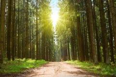 Chemin forestier et lumière du soleil à l'arrière-plan de nature de ressort de forêt de l'Allemagne photo libre de droits