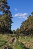 Chemin forestier et ornière pendant l'été sibérien de forêt de pin images libres de droits