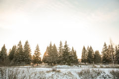 Chemin forestier et soleil d'hiver Photos stock