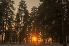 Chemin forestier et soleil d'hiver Photographie stock