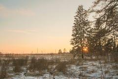 Chemin forestier et soleil d'hiver Images stock