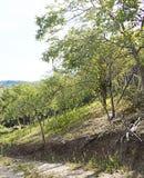 Chemin forestier - Ghioroc Arad Romania photo libre de droits