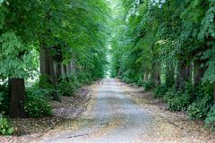 Chemin forestier intéressant avec les arbres verts des deux côtés photo stock