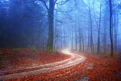 Chemin forestier mystérieux Image libre de droits
