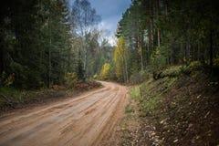 Chemin forestier passant par la forêt d'automne photo libre de droits