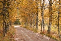 Chemin forestier pendant l'automne Photographie stock libre de droits