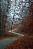 Chemin forestier pittoresque Photo libre de droits