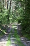 chemin forestier pour pulser ou faire un cycle au soleil images libres de droits