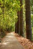 Chemin forestier rayé par arbre Images libres de droits