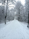 Chemin forestier russe d'hiver Image stock