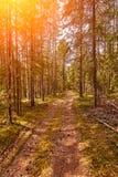 Chemin forestier sous des rayons de soleil de coucher du soleil Ruelle fonctionnant par l'été Forest At Dawn Or Sunrise à feuille images libres de droits