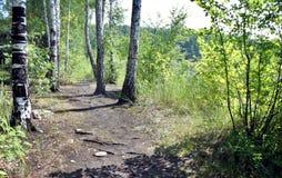 Chemin forestier un jour ensoleillé Photos stock