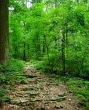 Chemin forestier vert Photographie stock libre de droits