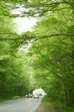 Chemin forestier vert photos stock