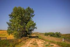 Chemin herbeux divisant des champs d'agriculture Image libre de droits