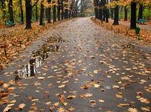 Chemin humide couvert de lames tombées photographie stock libre de droits