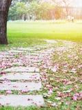 Chemin incurvé de brique avec les fleurs de trompette en baisse roses images stock