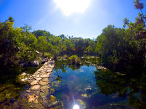 Chemin inondé dans la jungle Photo stock