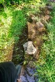 Chemin inondé pendant l'été Le concept des obstacles quotidiens Photo libre de droits