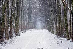 Chemin large dans la forêt d'hiver pendant le snowfall_ photographie stock