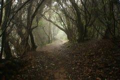 Chemin large de saleté dans la forêt images stock