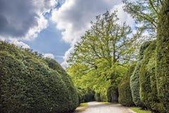Chemin le long des arbres Image libre de droits