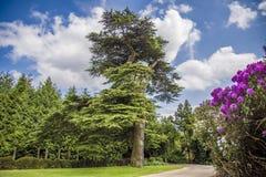 Chemin le long des arbres avec des fleurs photos stock