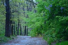 Chemin mélancolique Images stock